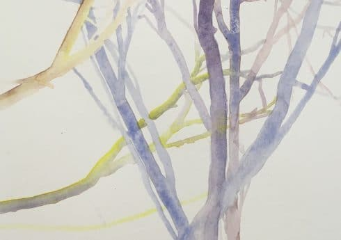 Coloured branches © Rachel Labovitch