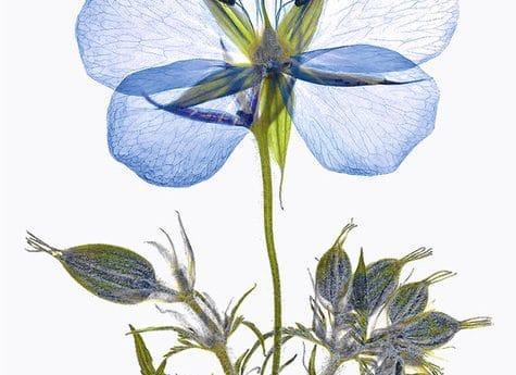 Save Me I'm Wild - pressed flower prints