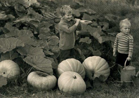 Two boys in a pumpkin patch, c.1940, Mr Charles Stride of Shillingstrone, Dorset