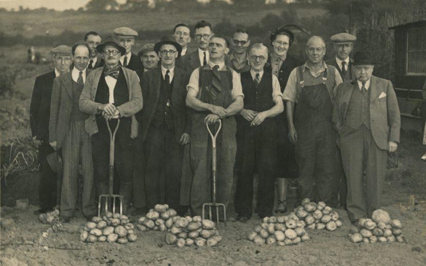 Potato competition, 1949, at the Lye & Wollescote Allotment Society near Northampton
