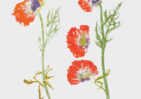 2011, Poppy Study, screenprint, 49 x 61 cm