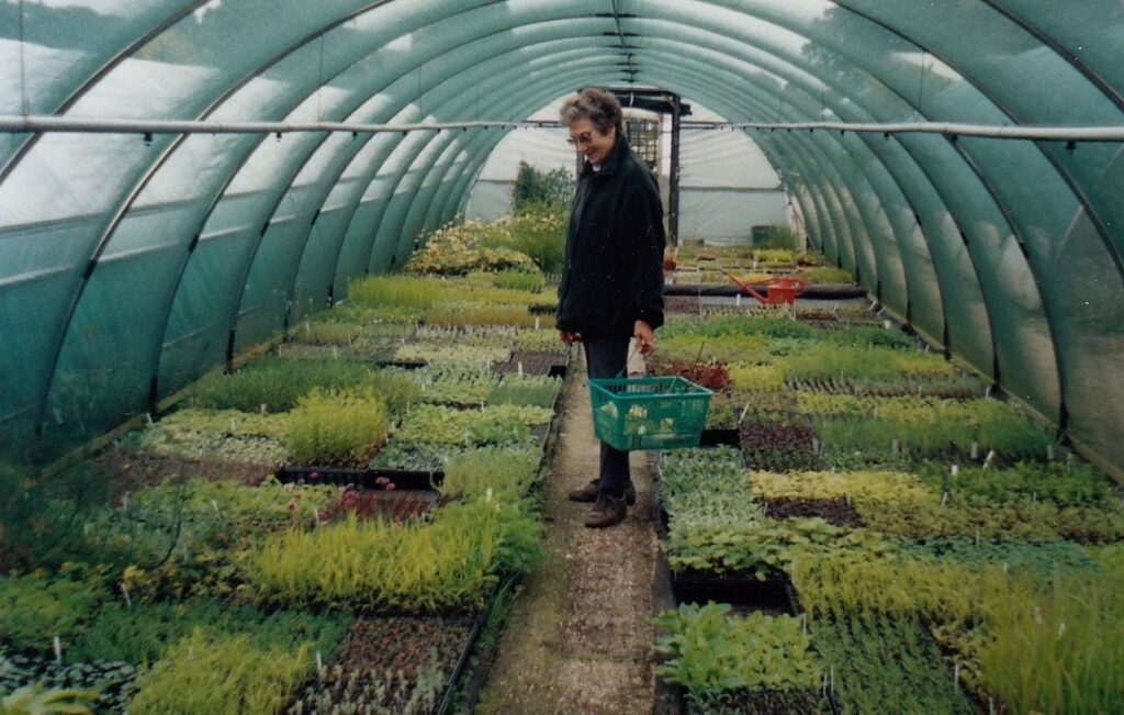 Beth Chatto in a nursery poly-tunnel with young plants, 2000.