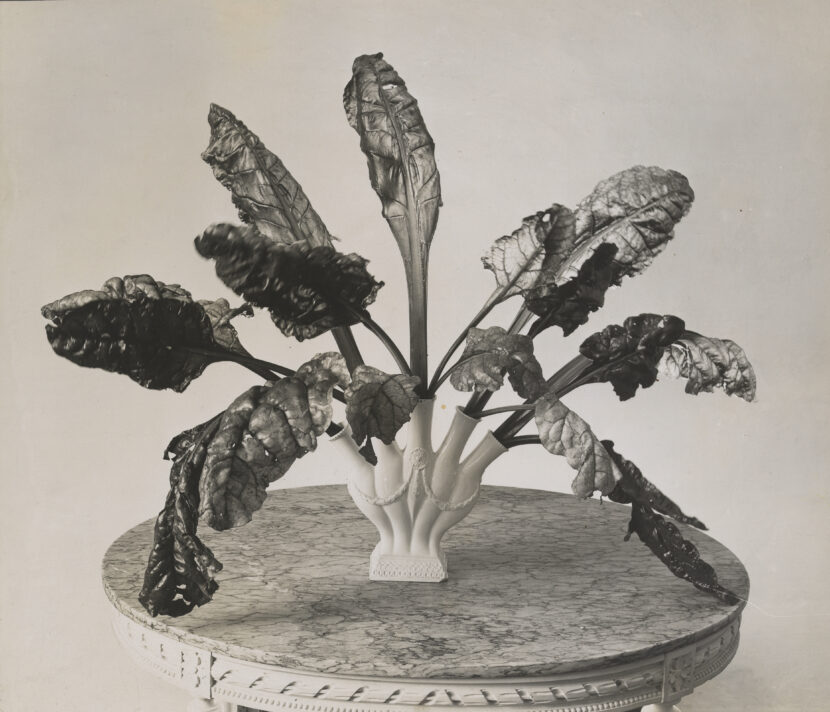 Photo of chard leaves. Silver Gelatin Print. 15.3 cm x 17.7 cm.