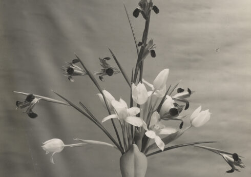 Fulham pottery Fleur de lys vase with tulips and iris, arrangement by Constance Spry, photo Paul Laib, c.1937 / RHS Lindley Collections