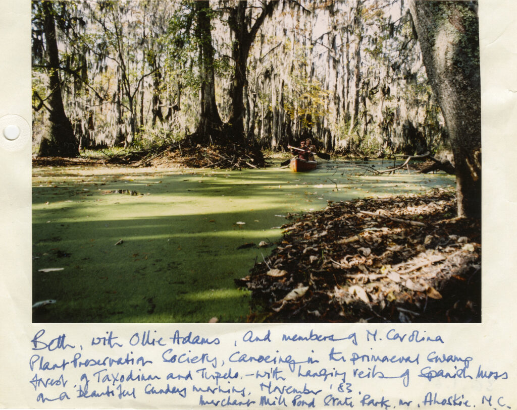 Beth, with Ollie Adams, and members of N. Carolina Plant Preservation Society, canoeing in the primaeval swamp forest of Taxodium and Tupelo - with hanging veils of Spanish Moss on a beautiful Sunday morning, November '83. Merchant Mill Pond State Park, nr Ahoskie, N.C.