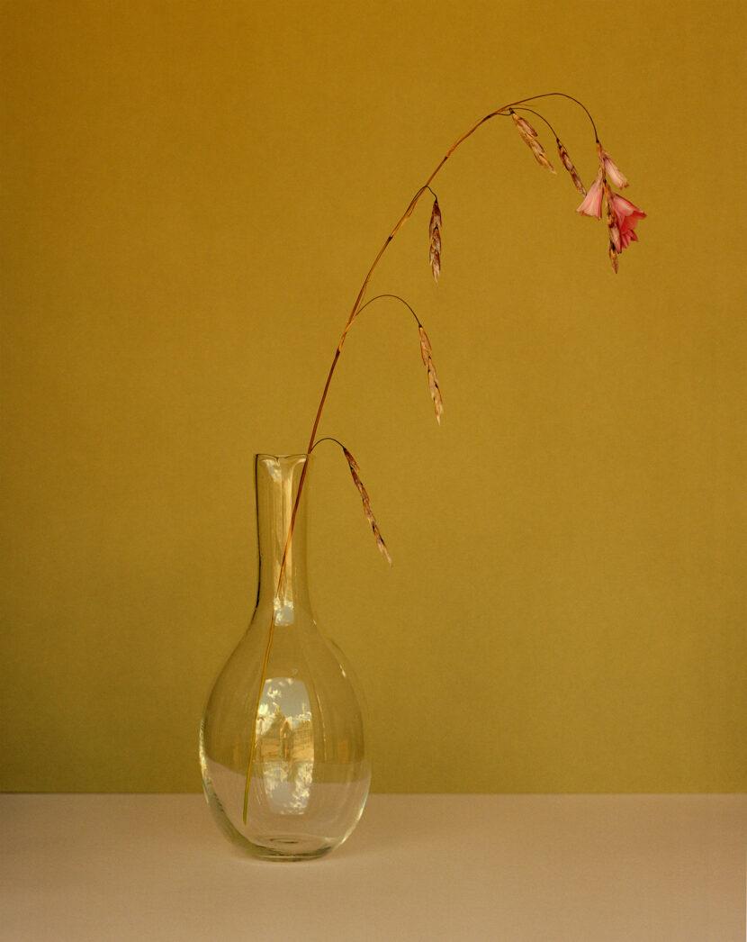 Dan Pearson, Dierama pulcherrimum, Somerset