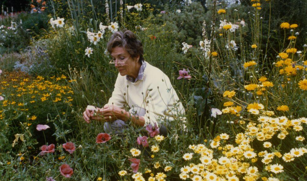 Beth Chatto: Unusual Plantswoman